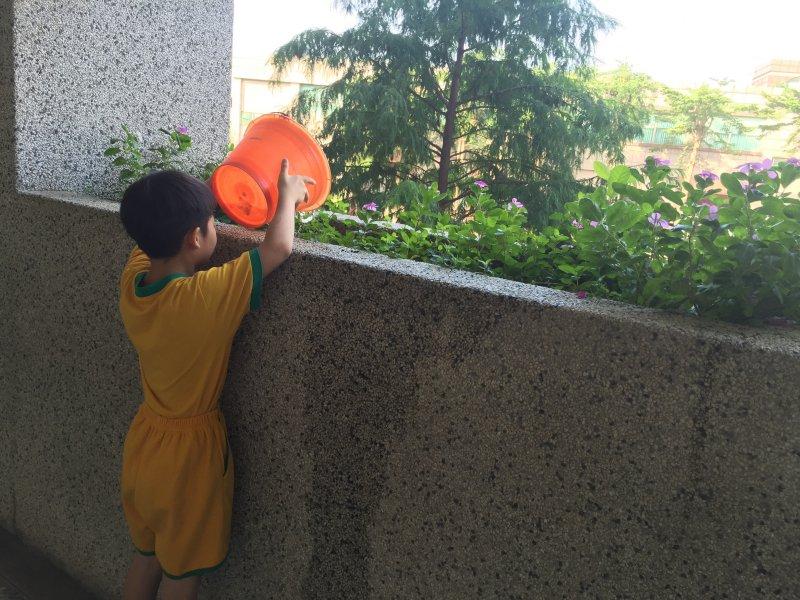 每天澆五小桶的水
